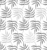 Drawing of the leaves of the fern Stock Image