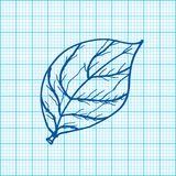 Drawing of leaves on graph paper vector Royalty Free Stock Images