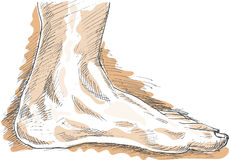Drawing of left human foot Royalty Free Stock Photography