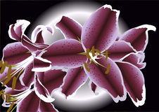Drawing of lillies Stock Photos