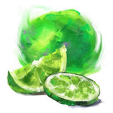 Drawing lime with a slice Royalty Free Stock Photo