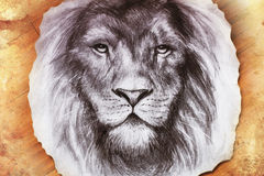 Drawing of a lion head with a majestically. Peaceful expression on wood abstract background. eye contact Stock Photo