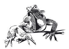 Drawing lizard black and white Royalty Free Stock Image