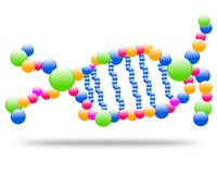 Drawing logo dna molecule, chromosome. royalty free illustration