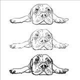 Drawing of  lying bullmastiff Royalty Free Stock Photography