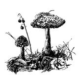 Drawing mushroom fly agaric, sketch graphics hand drawn ink  illustration Royalty Free Stock Image