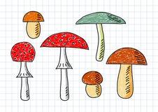 Drawing of mushrooms Royalty Free Stock Image