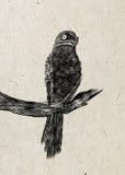 Drawing of nightjar bird sitting on branch, black silhouette on beige rice paper background. Stock Image