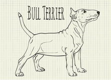 Drawing on notebook sheet Bull Terrier Stock Photos