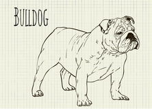 Drawing on notebook sheet Bulldog Royalty Free Stock Images