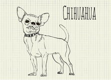 Drawing on notebook sheet Chihuahua Stock Photo