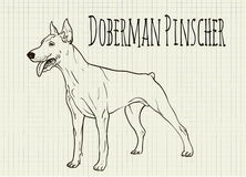 Drawing on notebook sheet Doberman Royalty Free Stock Images