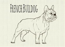 Drawing on notebook sheet French Bulldog Royalty Free Stock Photography