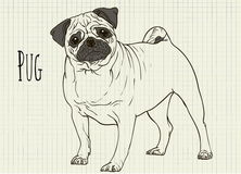 Drawing on notebook sheet pug Stock Images