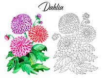 Drawing Of Beautiful Dahlia Flower Royalty Free Stock Image