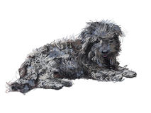 Drawing Of Lying Poor Shih-tzu Dog Isolated On White Royalty Free Stock Images