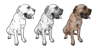 Drawing Of Mastiff Dog On Sitting Pose Stock Photos