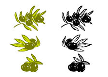 Drawing olives Stock Photo