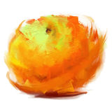 Drawing orange. Vector  orange - drawn by oil paints Stock Image