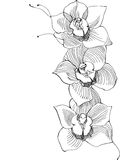 Drawing orchid Stock Photo