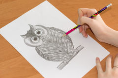 Drawing of the owl on a sheet of paper Stock Image