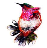 Drawing on paper of colorful paradise bird Stock Images