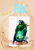 Drawing on paper of green paradise bird Stock Photography