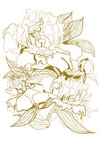 Drawing peonies bouquet Royalty Free Stock Photos