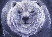 Drawing of a polar bear Royalty Free Stock Photo