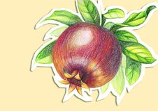 Drawing of pomegranate with colored pencils on a beige background stock illustration