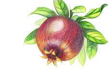 Drawing of pomegranate with colored pencils on a white background stock photography