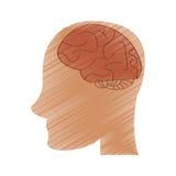 Drawing profile head brain idea imagination Royalty Free Stock Image