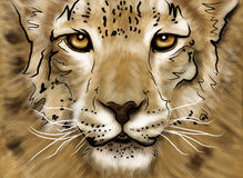 Free Drawing Puma Royalty Free Stock Images - 19968969