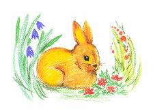 Drawing of rabbit Royalty Free Stock Photos