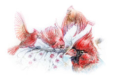 Drawing of red birds on branches. Birds cardinal drawing - wildlife scene with four red birds on tree branches Stock Images