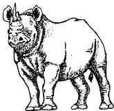 Drawing of a rhinoceros sketch Royalty Free Stock Photos