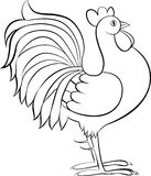 Drawing of rooster or cock vector sketch Royalty Free Stock Image