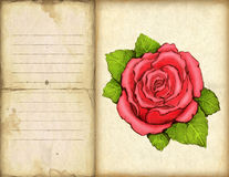 Drawing of rose Stock Photography