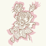 Drawing rose flower decorative Royalty Free Stock Image