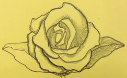 Drawing. Rose, my drawing, on the yellow paper background stock image