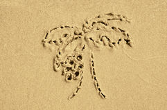 Drawing on the sand palm Royalty Free Stock Images