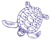 Drawing sea turtle Royalty Free Stock Photography
