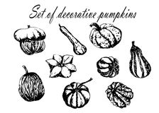 Drawing set collection of decorative striped pumpkin sketch illustration. Drawing set collection of decorative striped pumpkin sketch hand drawn illustration stock illustration
