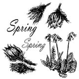 Drawing set collection of forest primroses, first spring flowers sketch   illustration Stock Image