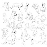 Vector set of dogs Royalty Free Stock Photography