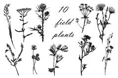 Drawing set of 10 field grasses, sketch, hand-drawn  illustration Stock Photos