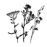 Drawing set of field grasses, sketch, hand-drawn  illustration Royalty Free Stock Photos