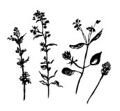 Drawing set of forest grasses graphic  illustration Royalty Free Stock Image