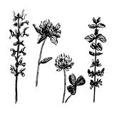 Drawing set meadow and field flowers  illustration. Drawing set meadow and field flowers, hand-drawn sketch  illustration Stock Images