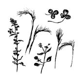 Drawing set meadow and field flowers, sketch  illustration. Drawing set meadow and field flowers, hand-drawn sketch  illustration Royalty Free Stock Photo